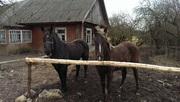 Красивые ухоженные лошадки