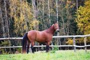 продам лошадь пони-класса
