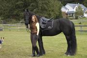 Фризской мерина лошадь