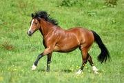 Куплю лошадей для себя дорого.
