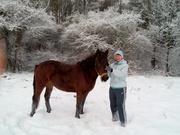 Продам любимую лошадку