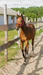 Дать бесплатное объявление продажа лошади 03.059 работы и услуги по специальности стоматология терапевтическая