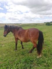 Продам лошадь в отличном состоянии.  Воложинский район.